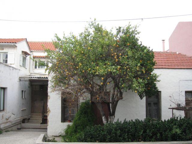 Дом и апельсиновое дерево